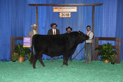Grand Champion Full Blood Bull - 2018 North American International Livestock Exposition
