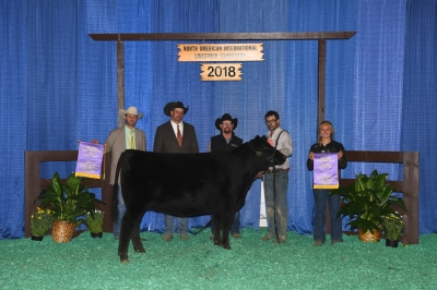 Grand Champion Purebred Female (the girl in the photo was Grand Championship in Showmanship) - 2018 North American International Livestock Exposition