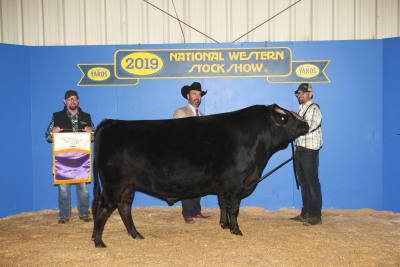 Grand Champion Wagyu Fullblood Bull 2017 & 2018, Little Willie from Emerson Cattle Company